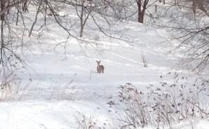 鹿がいました。