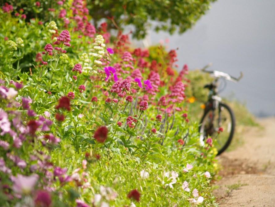 bike-with-flowers-1311528-1280x960