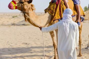 Ökensafari med dromerarridning - Dubai - UAE