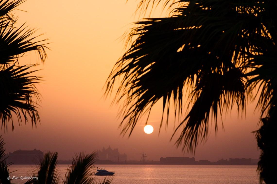 Solnedgång över the Palm Jumeria