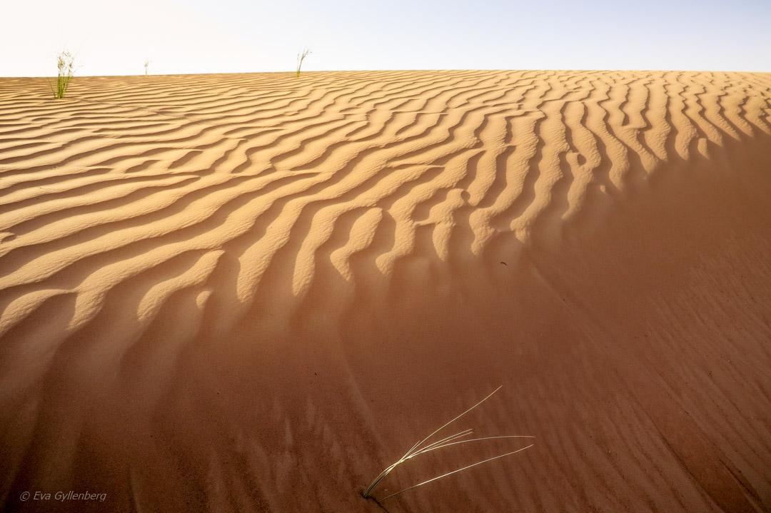 Öknen Förenade Arabemiraten