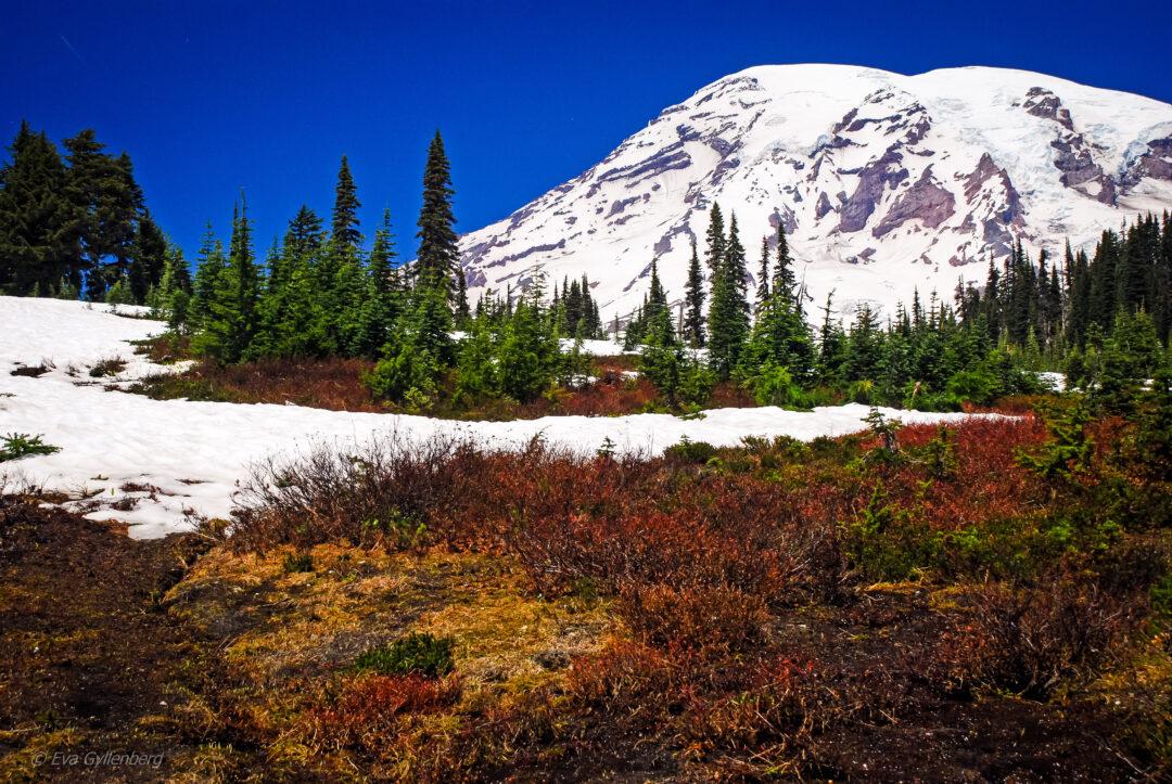 Sommarvandring på snö - Mount Rainier - Washington