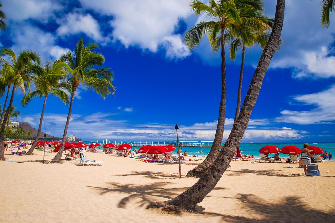 Topp 11 sevärdheter på Oahu, Hawaii