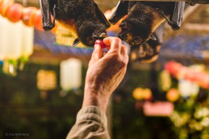 Tolga Bat Hospital - Queensland - Australia