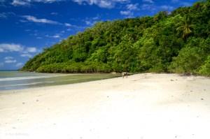 Cape Tribulation - Daintree - Queensland - Australien