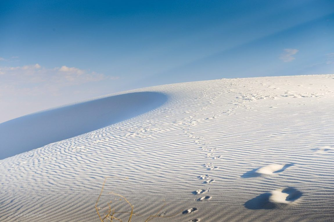 White Sands National Monument - New Mexico (18)