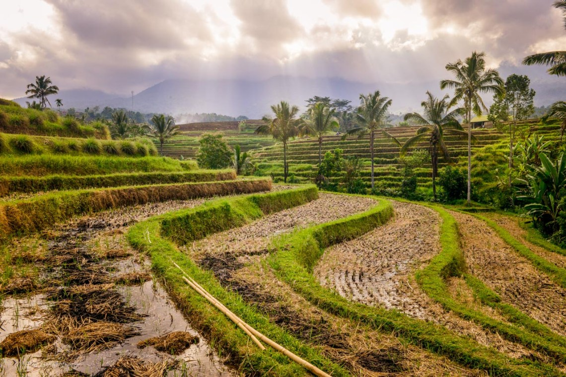 Jatiluwih resterrasser på Bali