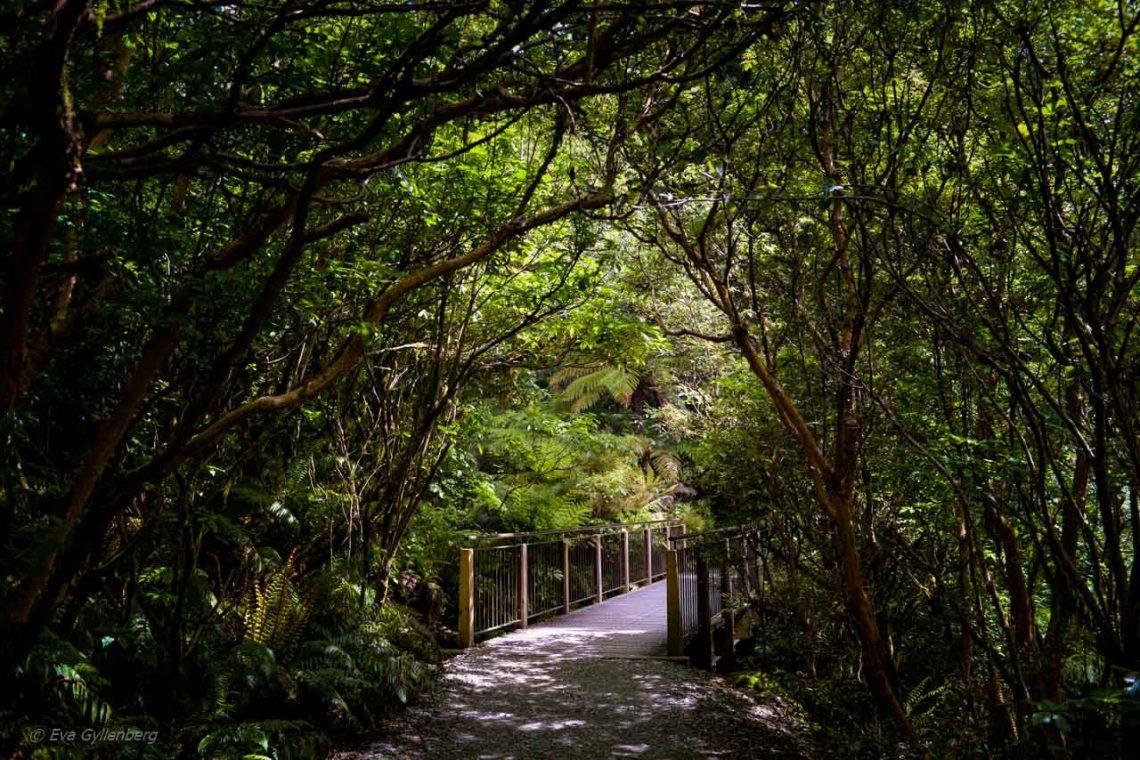 Vandringsled på vägen till Milford Sound