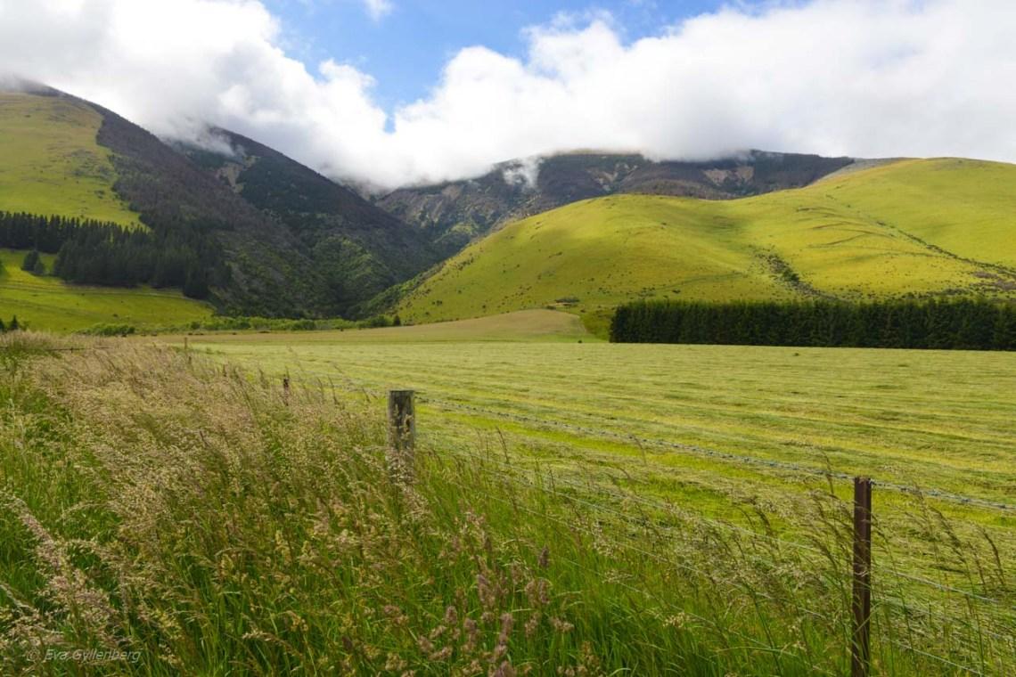 Gröna kullar utanför Te Anau