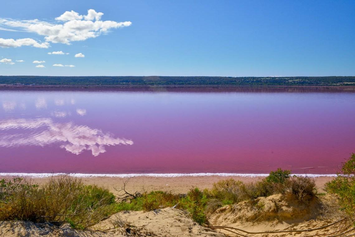 rosa pärla i australien