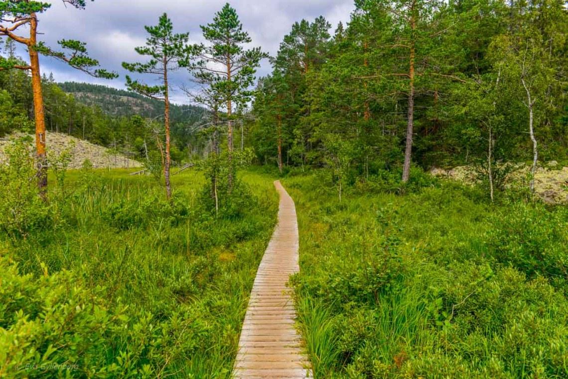 A little marshland on the way to Slåttdalsskrevan