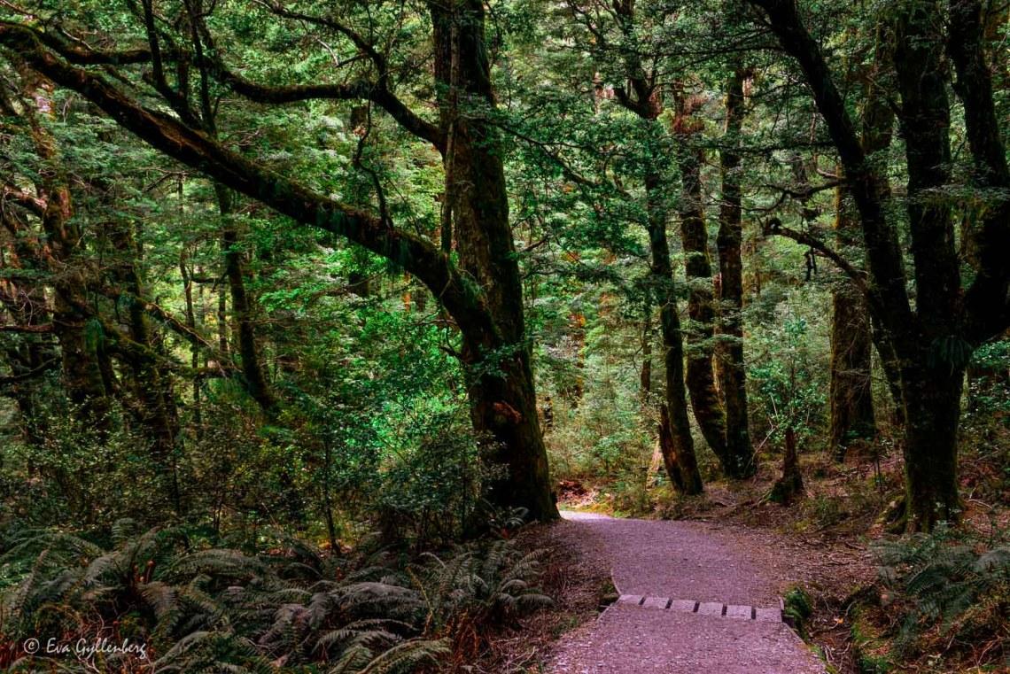 Skogen i nationalparken