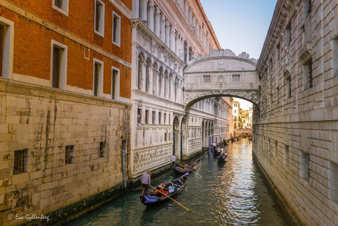 Suckarnas bro i Venedig