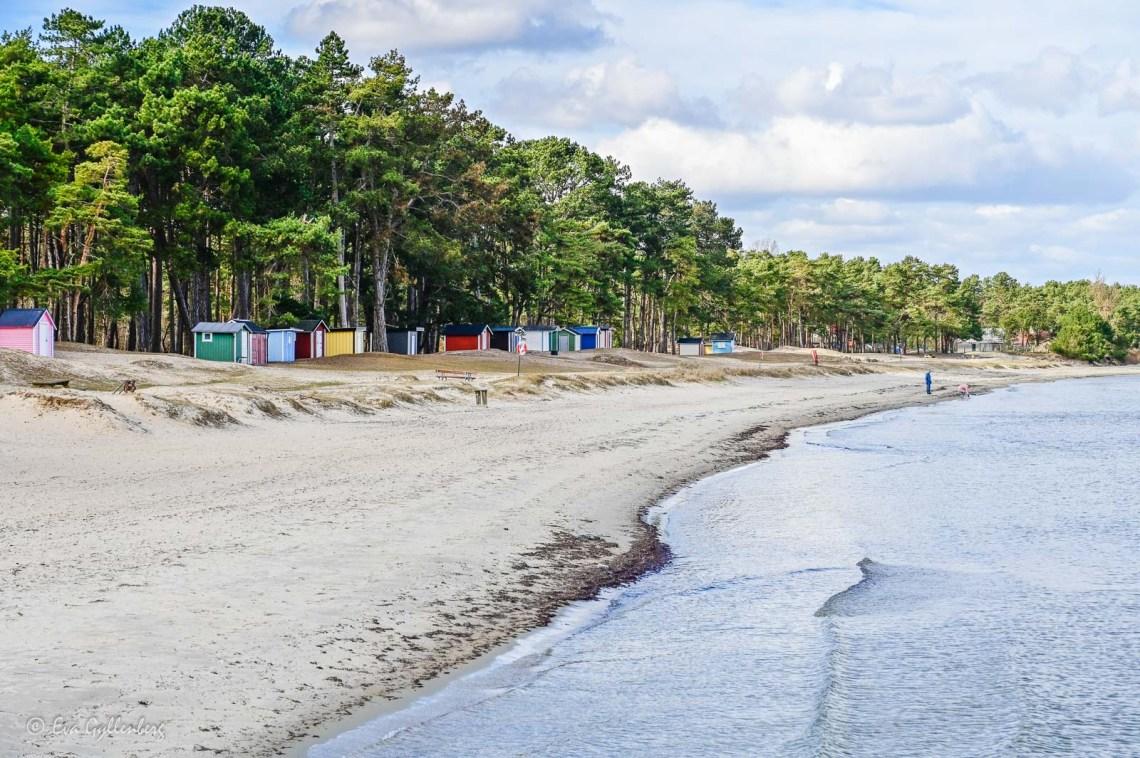 The carpet beach