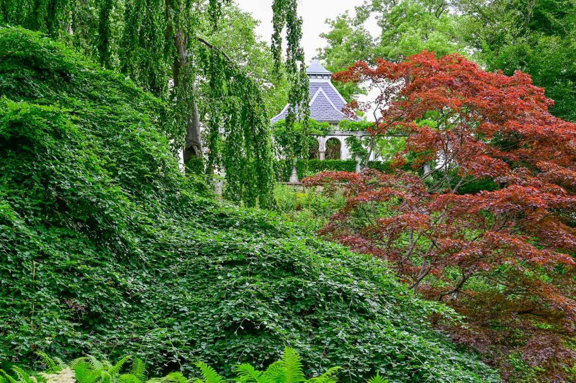 Trees in the Japanese garden