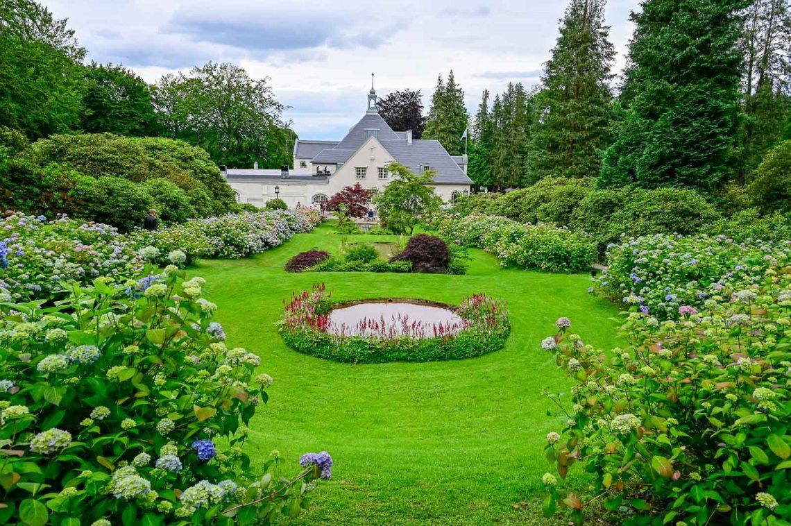 Hydrangea garden overlooking the house