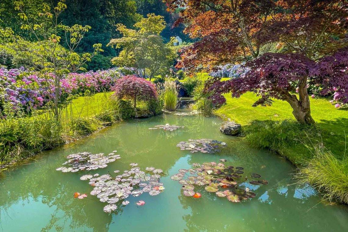 Magically beautiful pond surrounded by hydrangeas