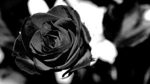 Unique Facts Of Black Roses