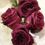 How to preserve roses