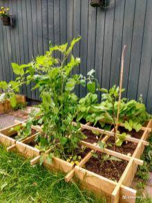 Tomatenplant schiet alle kanten op