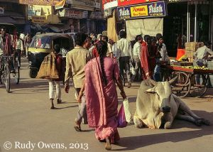 Street Scene And Cow