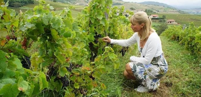 A la veille du Beaujolais nouveau, réflexions d'une vigneronne