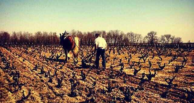 Une journée de labour à cheval dans le Beaujolais, avec Lilian Bauchet et Qualine