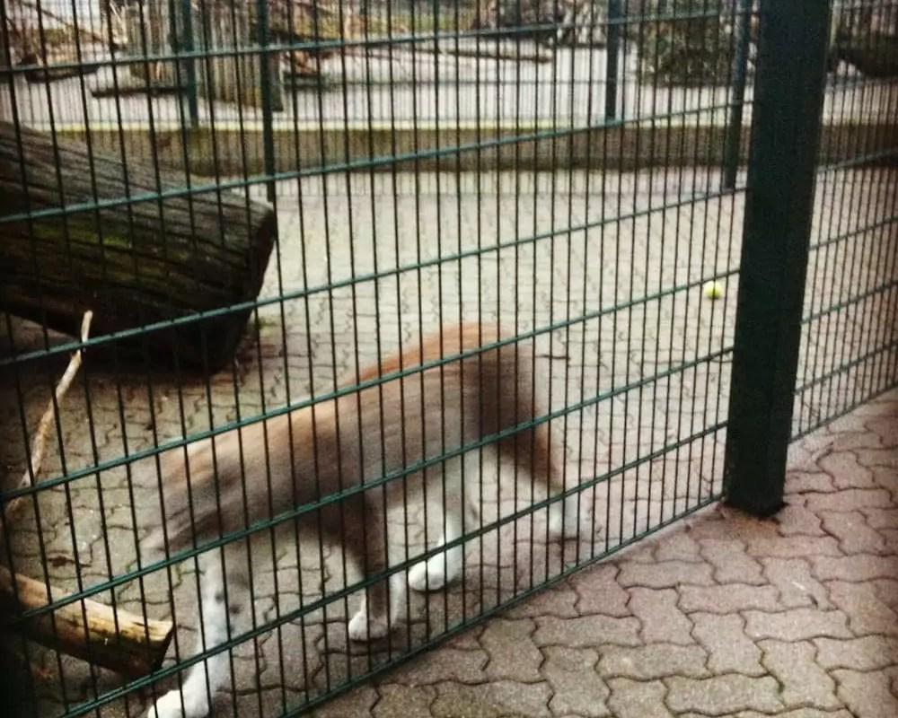 Une plainte déposée contre le zoo de l'Orangerie