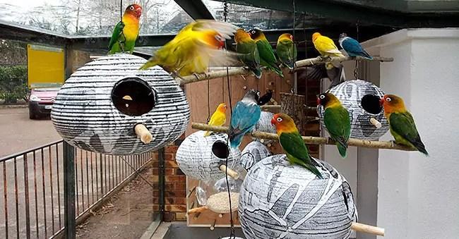 Nouveaux nichoirs (artistiques) pour inséparables au zoo de l'Orangerie