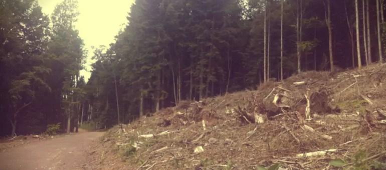 Pourquoi les forêts privées d'Alsace sont défigurées