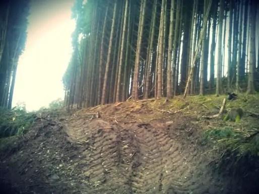 A Colroy-La-Roche, la Cosylval a effectué trois coupes à blanc, laissant une rangée d'arbres fragilisée, qui pourra tomber au premier coup de vent (Document remis)