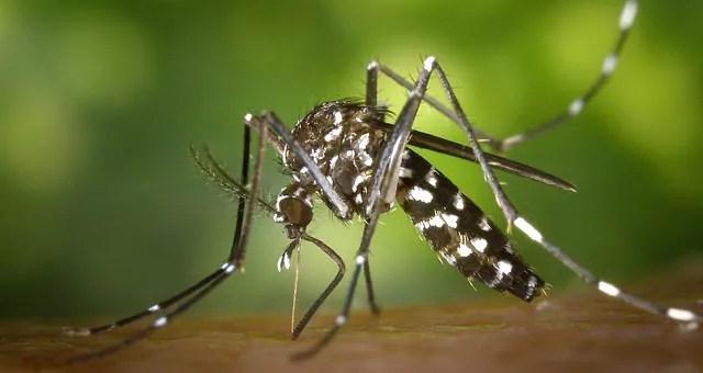 Opération anti moustique tigre à Schiltigheim : les détails