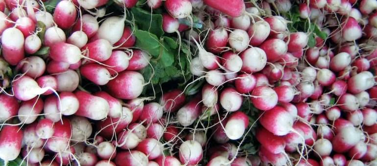 À Ungersheim, on paye en radis au nouveau marché local