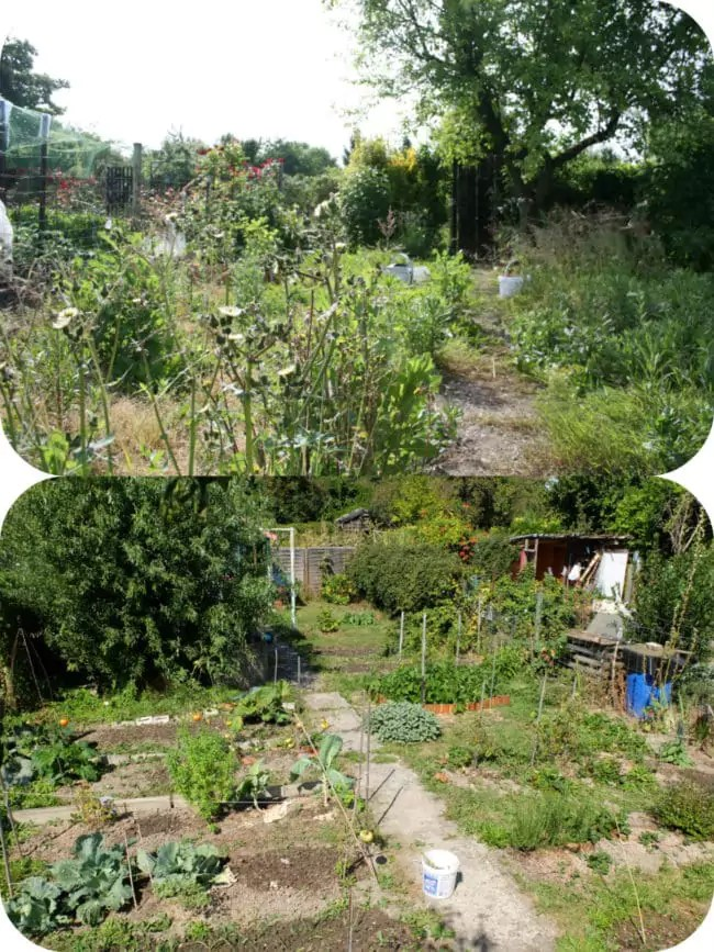 Mon jardin familial, en friche en 2015, cultivé en 2016 (Photo MM / Rue89 Strasbourg)