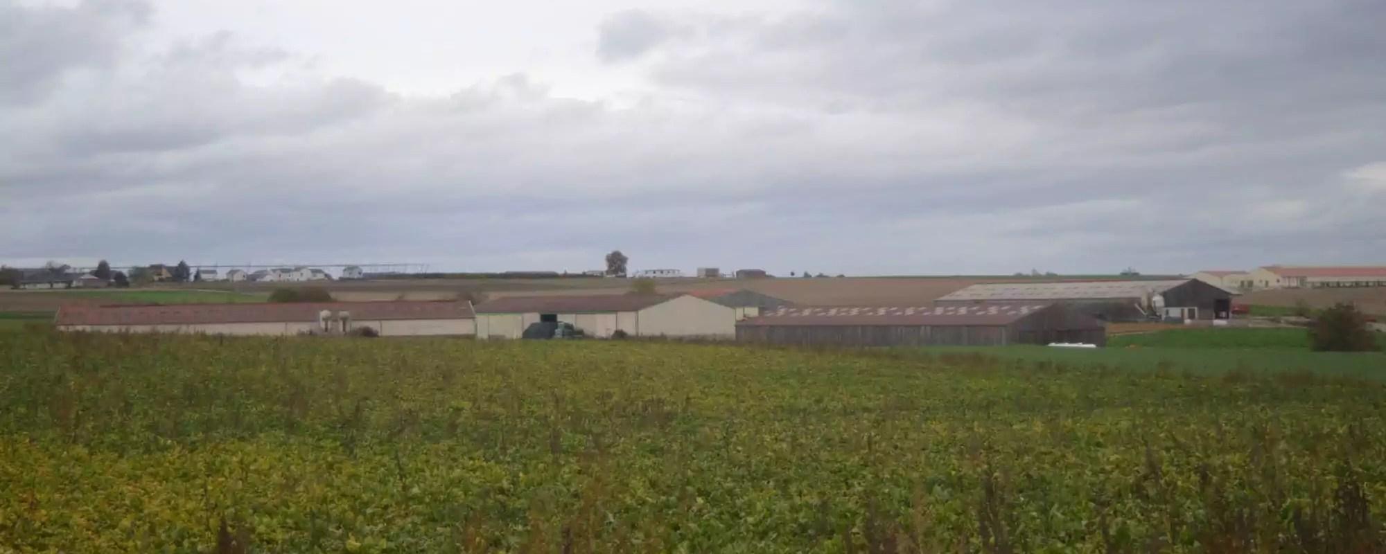 À Schnersheim, l'impossible dialogue entre habitants et agriculteurs autour d'un élevage de 1200 porcs