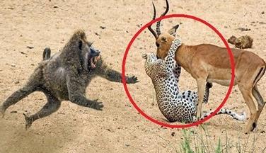 حيوانات أنقذت حياة حيوانات أخرى بشكل لايصدق