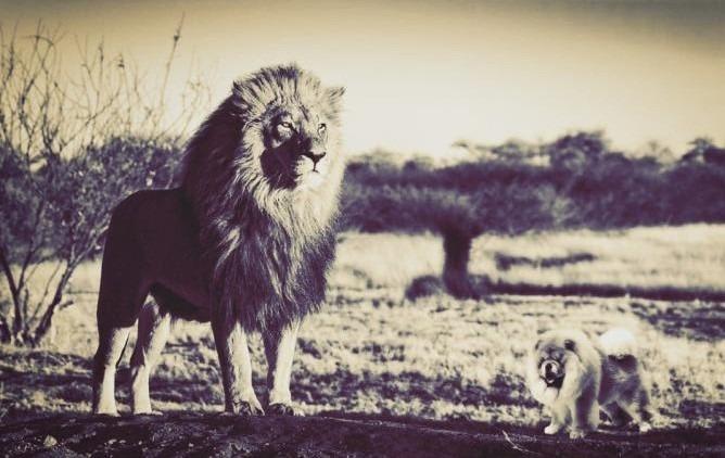Sou um Leão, Não Sou um Cão: um Sporting Cada Vez Menos Dono de Si Próprio