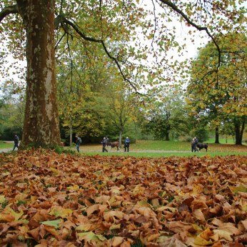 Schöne Herbststimmung