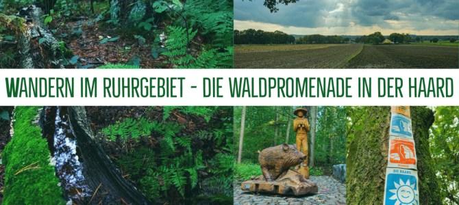 Wandern im Ruhrgebiet – Die Waldpromenade in der Haard