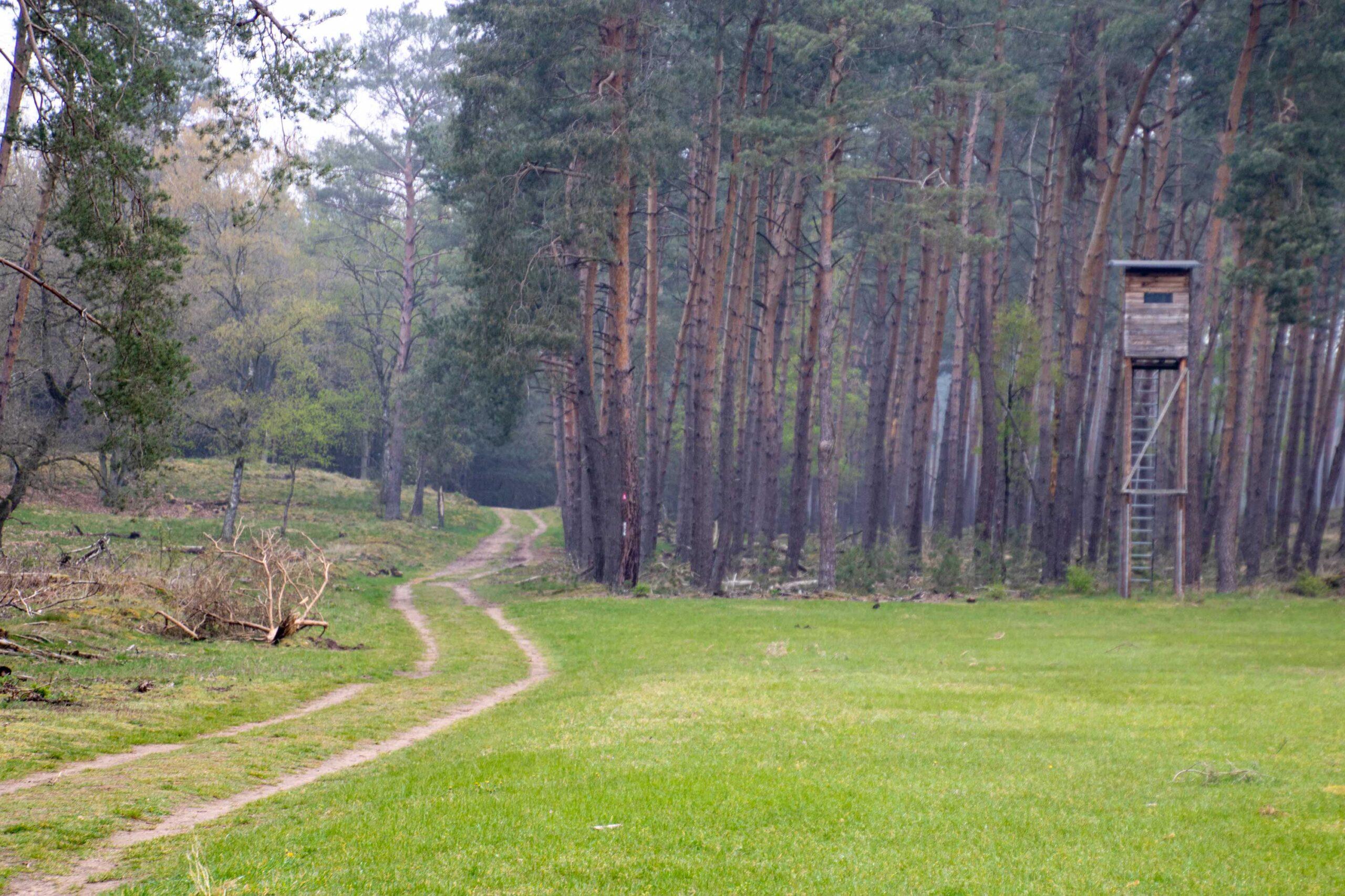 Offene Landschaft mit Blick auf Waldkiefern