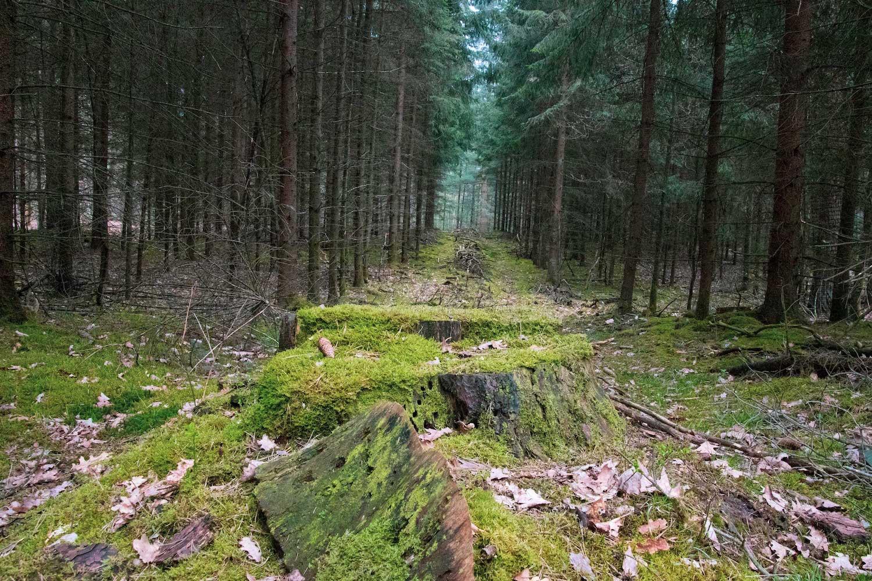 Blick in die Waldschneise