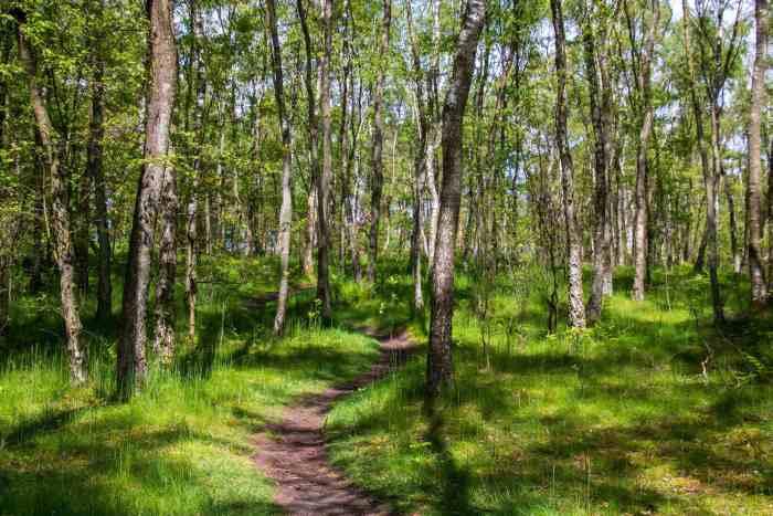 Schöne Waldpfade