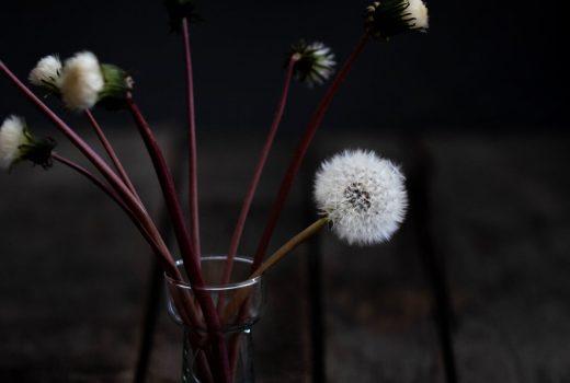 Pusteblumen haltbar machen: Einfaches DIY für den Frühling