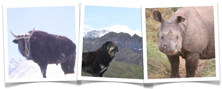 Some of the beautiful animals of Nepal