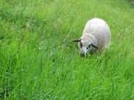Mia im satten Gras