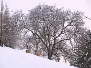 Nur die Älteste, Stampfi hat sich den Schnee etwas länger angeschaut.