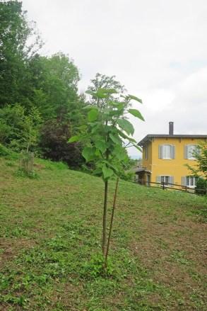 Ein Glockenbaum durfte bis in den Sommer bleiben
