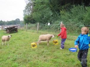 Im August gab es Sprungübungen mit den Schafe
