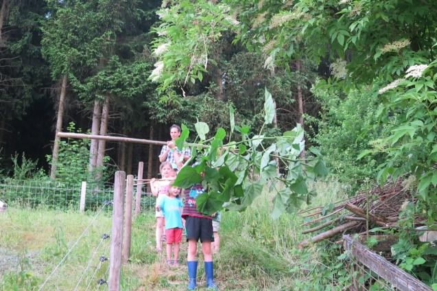 Der Glockenbaum von der Heuwiese musste nun dran glauben