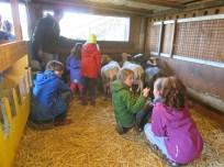 Schafe werden genauer betrachtet